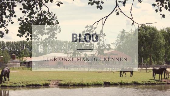 Blog Hazelaar